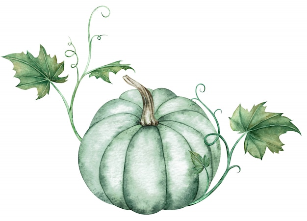 Watercolor illustration of blue pumpkin with green leaves