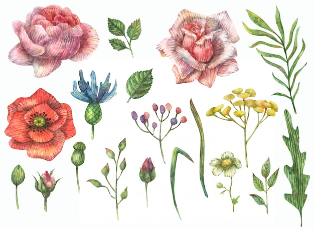 Watercolor illustration of flowers (rose, poppy, peony, anemone, cornflower, chamomile), branches and leaves. buds of roses and other wildflowers.
