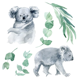 Watercolor illustration of a koala with eucalyptus branches. the symbol of australia is a cute koala bear with a cub behind its back. koala sketch hand-drawn.