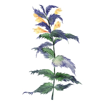 Watercolor illustration of mariannick asherah plant