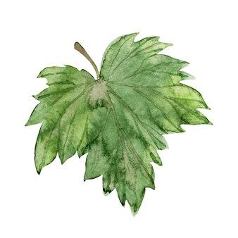 緑の葉の水彩イラスト