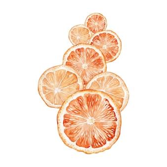 귤 과일의 수채화 그림