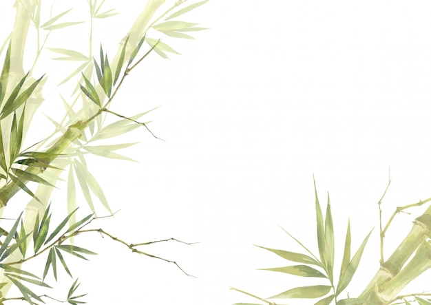 Watercolor illustration painting of bamboo leaves  background