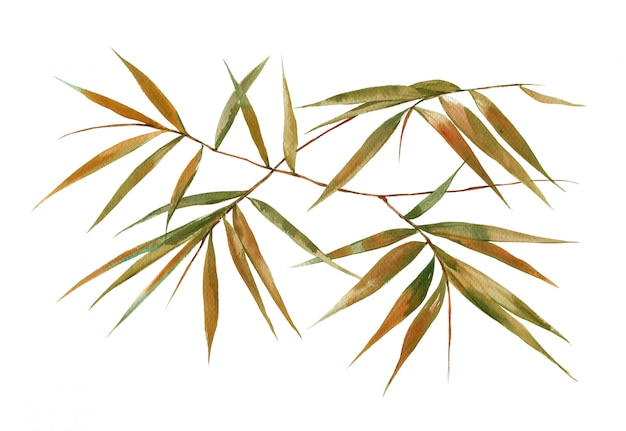 Watercolor illustration painting of bamboo leaves , on white