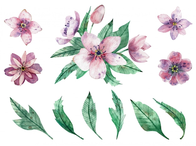 Watercolor illustration of pink flower compositions and elements
