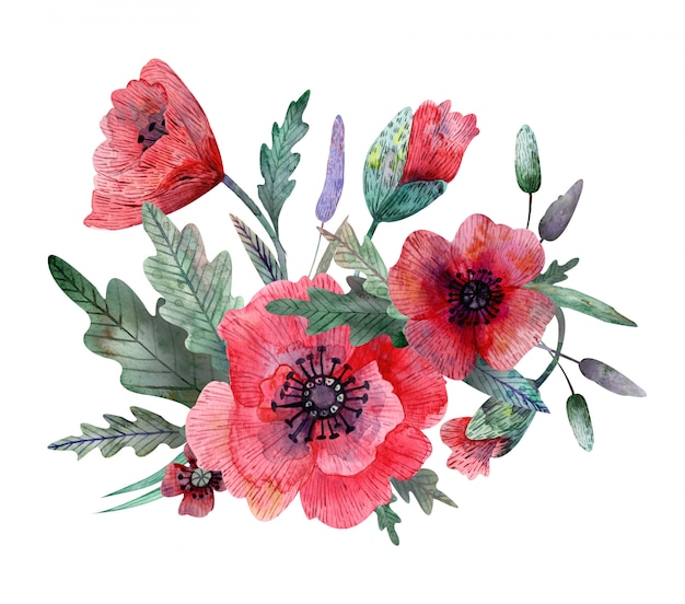 Watercolor illustration of poppy composition isolated