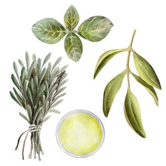 Watercolor illustration set with leaves, fruit and olive oil. oil and aromatic herbs