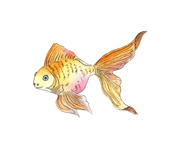 Watercolor illustration of a small goldfish aquarium fish sea life pet isolated white background