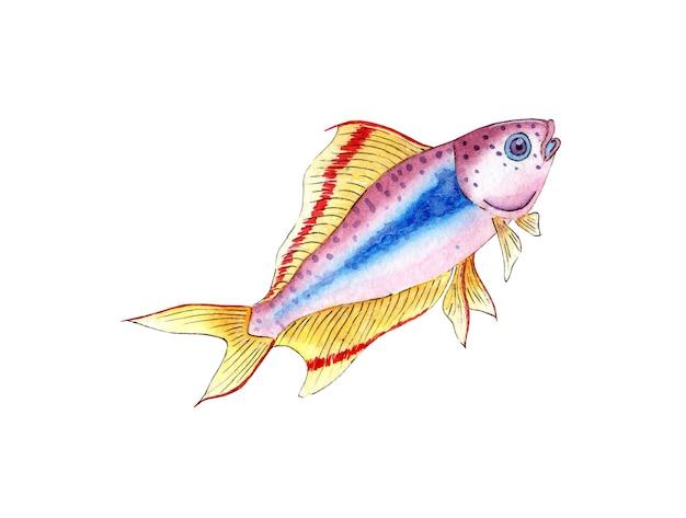 Watercolor illustration of a small lilac fish aquarium colorful fish sea life pet