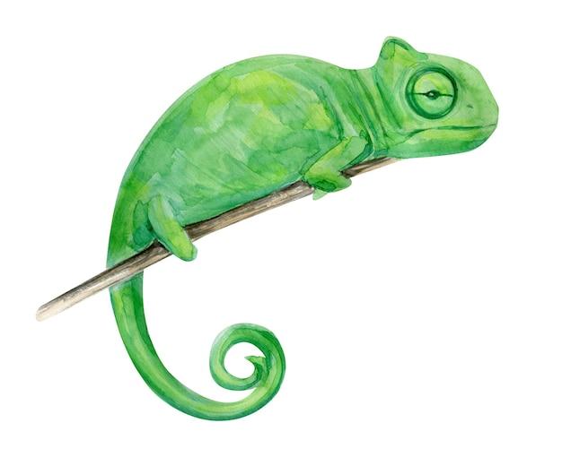 Акварельные иллюстрации тропических экзотических хамелеон.