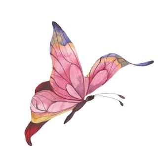 밝은 분홍색 나비 추상 여름 나비 고립 된 요소와 수채화 그림
