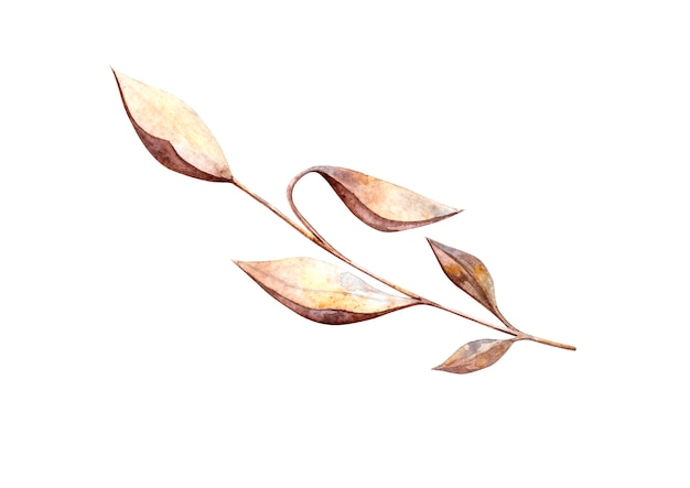 植物標本乾燥花秋の葉の小枝と白い背景の上の孤立した要素と水彩イラスト