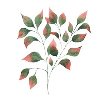 白い背景の上の赤い先端と秋の葉の枝緑の葉と水彩イラスト