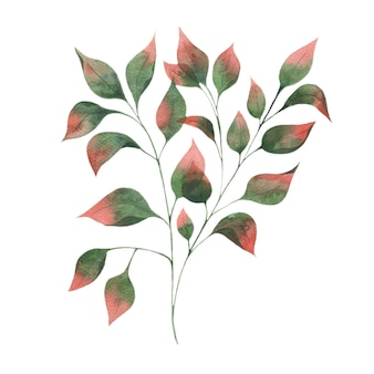 Watercolor illustration with autumn leaf branches, green leaves with red tips on a white background.