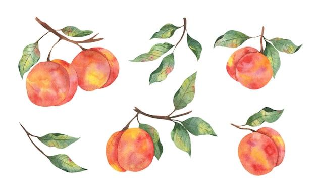 Акварельные иллюстрации с фруктами сочные персики с ветвями листьев на белом фоне