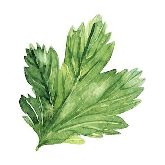 グーズベリーの葉と水彩イラスト