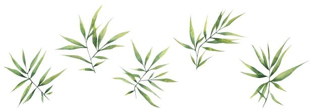 Акварельные иллюстрации с зелеными листьями бамбука, изолированные элементы на белом фоне