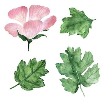 꽃이 핌, 꽃, 꽃 봉오리와 제라늄 식물의 잎 수채화 그림