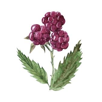 さまざまなベリーと葉の水彩イラスト