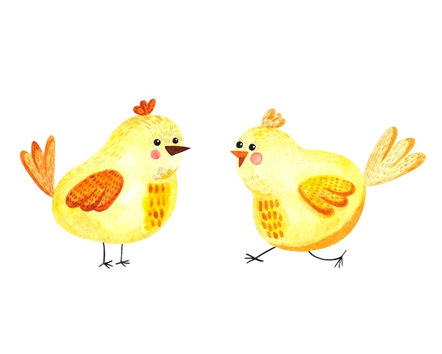 Watercolor illustration with yellow cute chickens on a white background