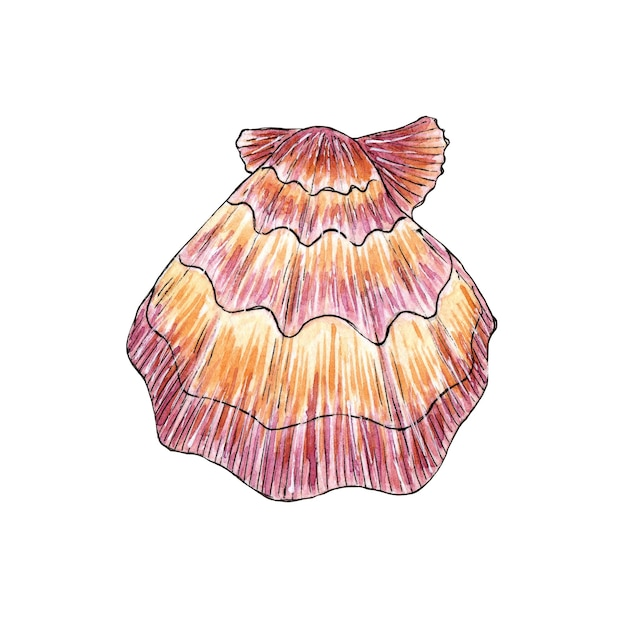 바다 핑크 가리비의 수채화 일러스트 수중 세계 열대 굴 껍질