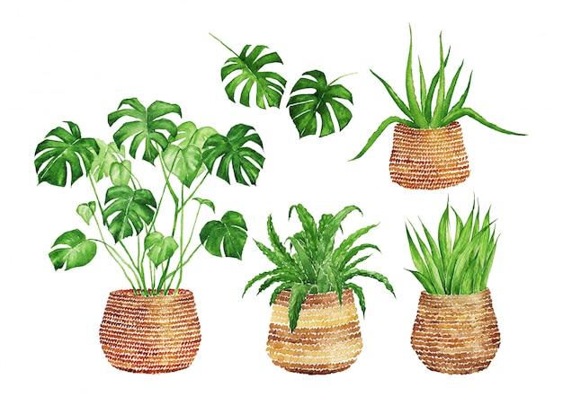 Watercolor indoor plants in wicker baskets