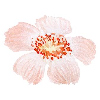 키 위 나무의 다양 한 세부 사항으로 수채화 고립 된 이미지. 꽃들