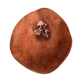 키 위 나무의 다양 한 세부 사항으로 수채화 고립 된 이미지. 과일