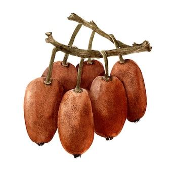 키 위 나무의 다양 한 세부 사항으로 수채화 고립 된 이미지. 과일 프리미엄 사진