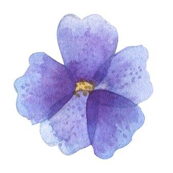 花びらと水彩の孤立した紫色の花の頭