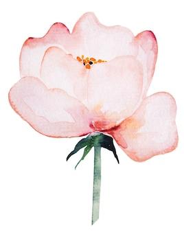 水彩淡いピンクの野生の花イラスト分離