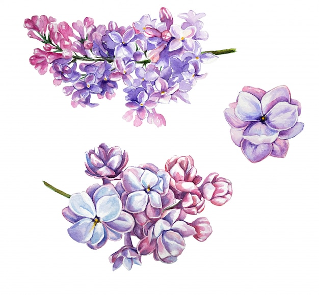 Watercolor lilac clipart set. isolated lilac flowers on a white