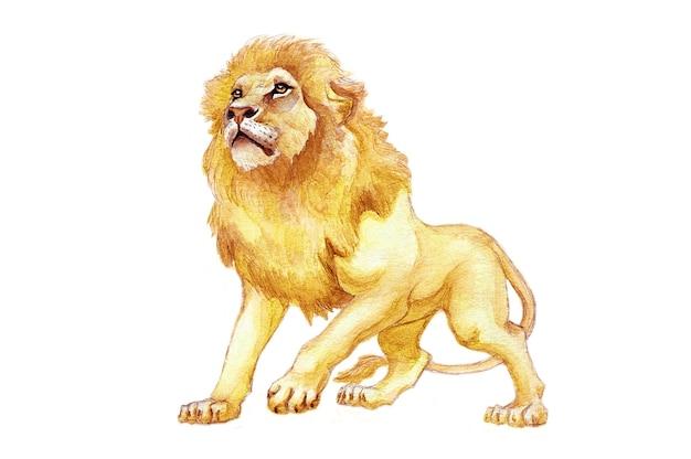 水彩ライオン