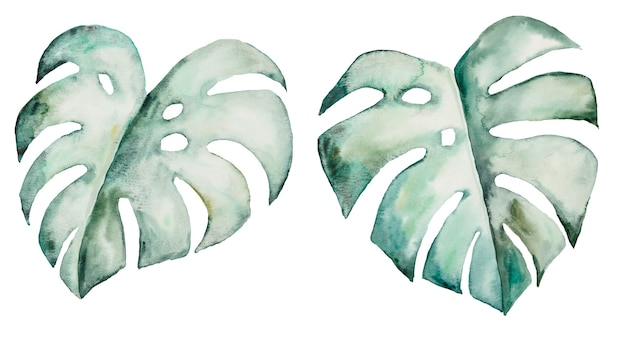 Watercolor monstera tropical leaves set illustration  isolated