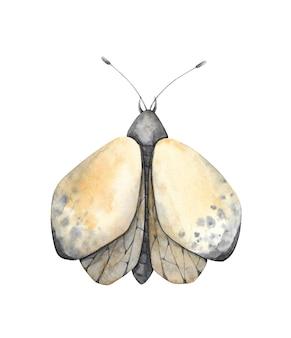 수채화 나방 그림입니다. 비행 곤충 클립 아트 흰색 배경에 고립입니다. 밤 나비 클립 아트.