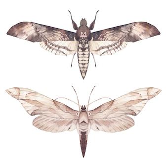 Набор акварели моли. нарисованные рукой иллюстрации бабочки изолированные на белой предпосылке. натуральный клип