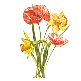 Watercolor narcissus and poppy. wild flower set isolated on white. botanical watercolor illustration, yellow narcissus bouquet, rustic flowers. watercolor illustration on white  set of