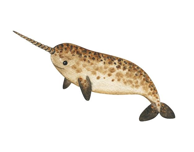 흰색 배경, 손으로 그린 그림, 수중 동물 예술에 고립 된 수채화 일각 고래