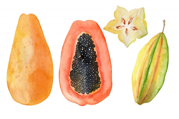 Watercolor objects bright exotic fruits