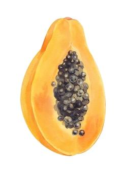 Акварель оранжевый половина папайи, изолированные на белом