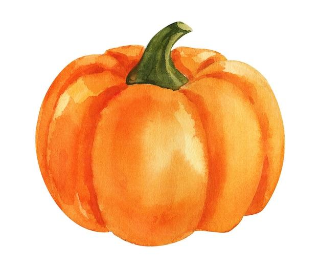 白い背景の上の水彩オレンジ色のカボチャ
