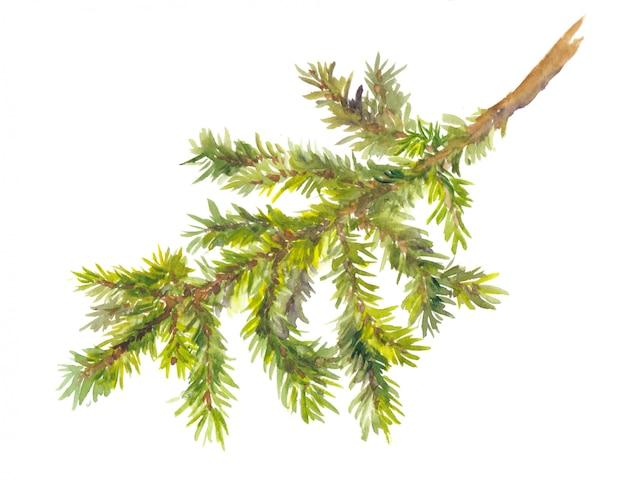 松の枝を描いた水彩画