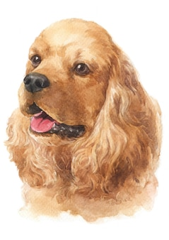 Watercolor painting of american cocker spaniel