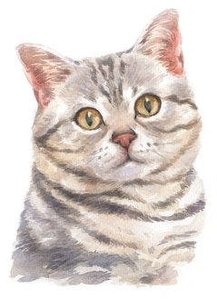 Watercolor painting of american shorthair
