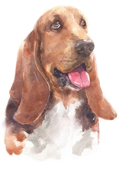 Watercolor painting of basset hound