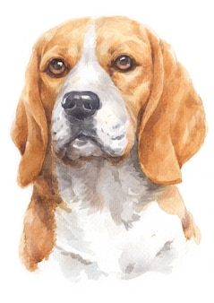 Watercolor painting of beagle