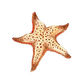 수채화 베이지색 불가사리 바다 해양 동물 해저에 서식하는 별의 다섯 광선