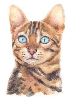 Watercolor painting of bengal