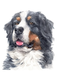 Watercolor painting of bernese mountain dog