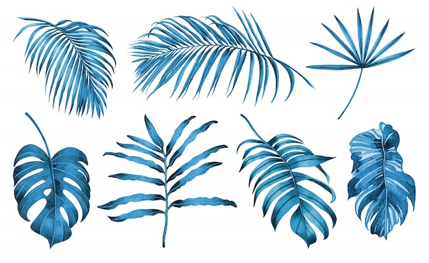 Watercolor painting blue and white set of tropical leaves background.